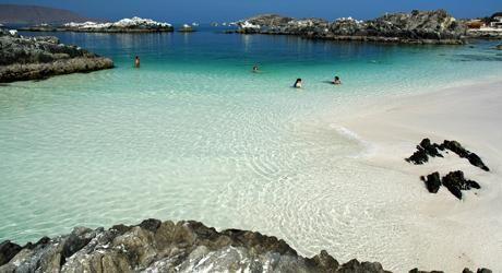 Bahía Inglesa, desierto florido -  Sitio oficial de Turismo de Chile