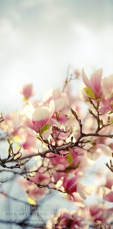 Vårens vakreste eventyr!