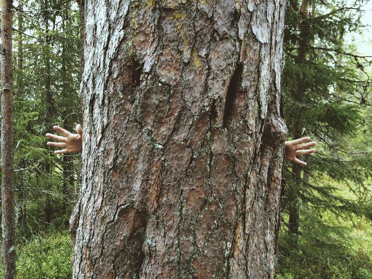 Finnish nature, Syöte