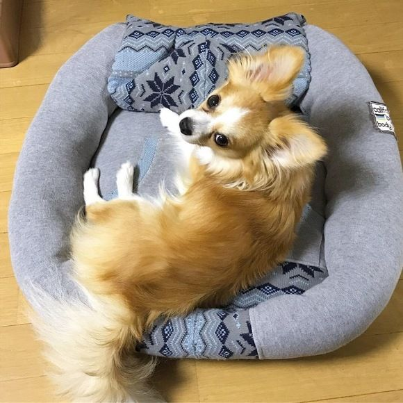 ダイソーの座布団で猫ベッドを作ってみた 今日も猫と 猫 ベッド 手作り 猫 こたつ 猫