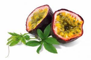 #Fruit de la passion 'frederick' en ligne (passiflora edulis 'frederick') - Willemse