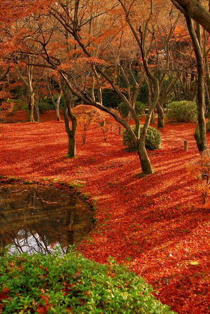 Kyoto Botanical Gardens, Japan: photo by デジカメ自由人