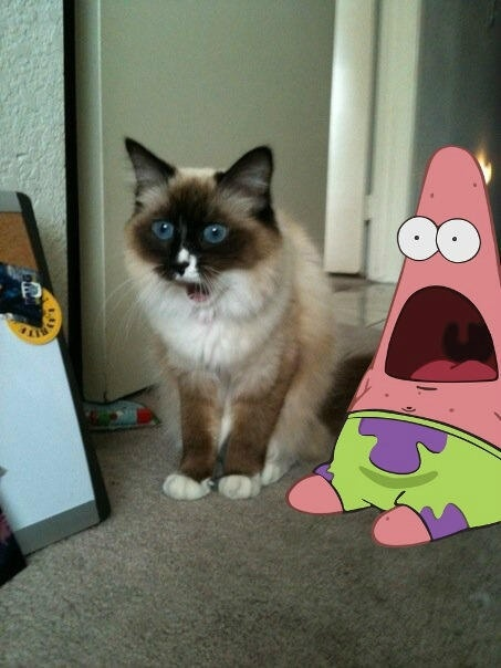 shocked patrick star ! Sooo cute!!!
