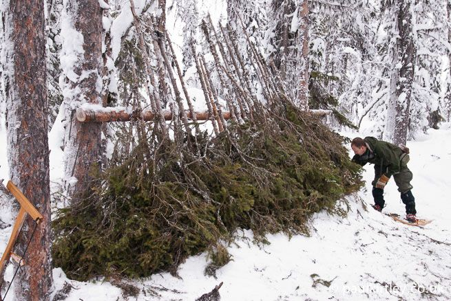 Adding spruce to a lean-to shelter