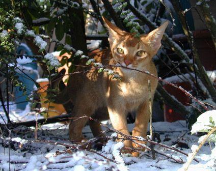 Otis félin des neiges!