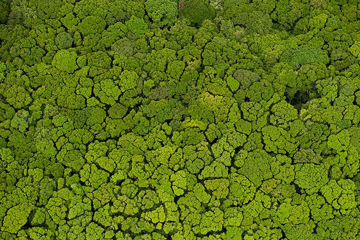 For This Forest, It's Easy Being Green - The Iwokrama forest in Guyana is protected by the Conservation Trust Fund, which provides funds for managing the country's intact protected tropical rainforests that are mostly untouched by humans. This is the first of its kind in Guyana. Having an ecosystem untouched by humans and industrial progress is a good thing for the climate. Deforestation is rampant in many parts of the world and generate one-fifth of all greenhouse gases emitted,