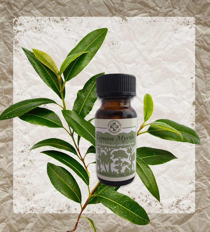 Australian lemon myrtle oil uses and benefits!