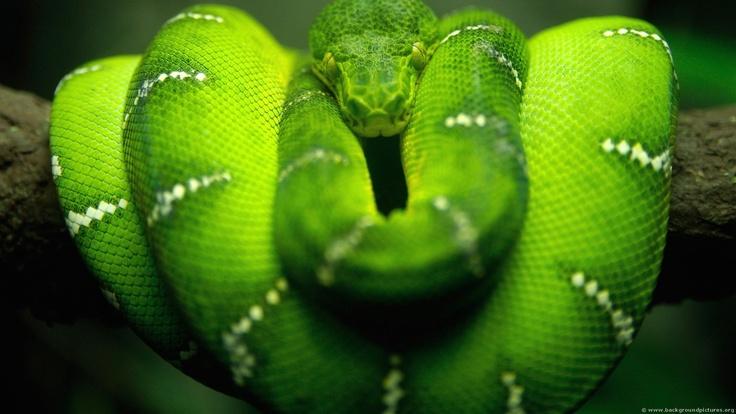 Snake Eater Snake Online Metal Gear Solid Pc Desktop Wallpaper
