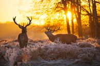 Wild animals with a great sunset. Great wallpaper for the lounge. www.wallpaper24.co.uk