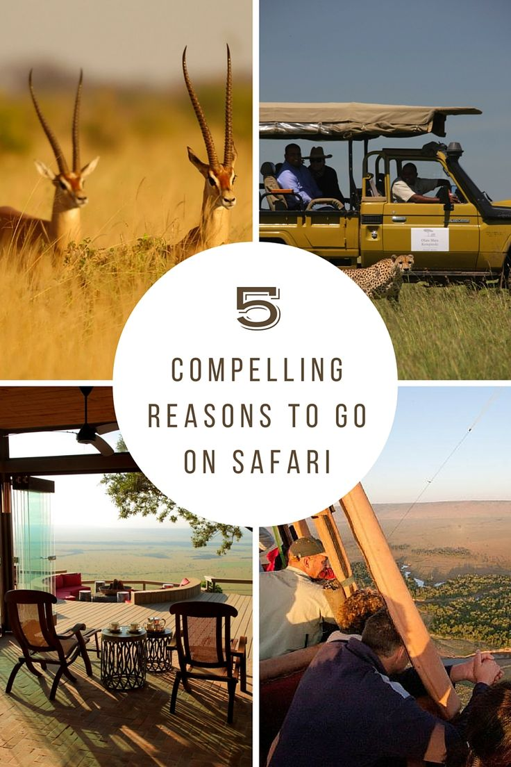 This is a blog on 5 Compelling Reasons To Go On Safari