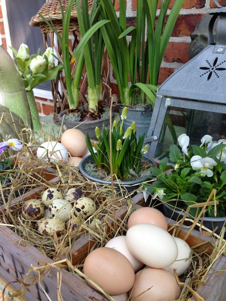 Fru Pedersens have: DIY smukt påskedekoration med æg.