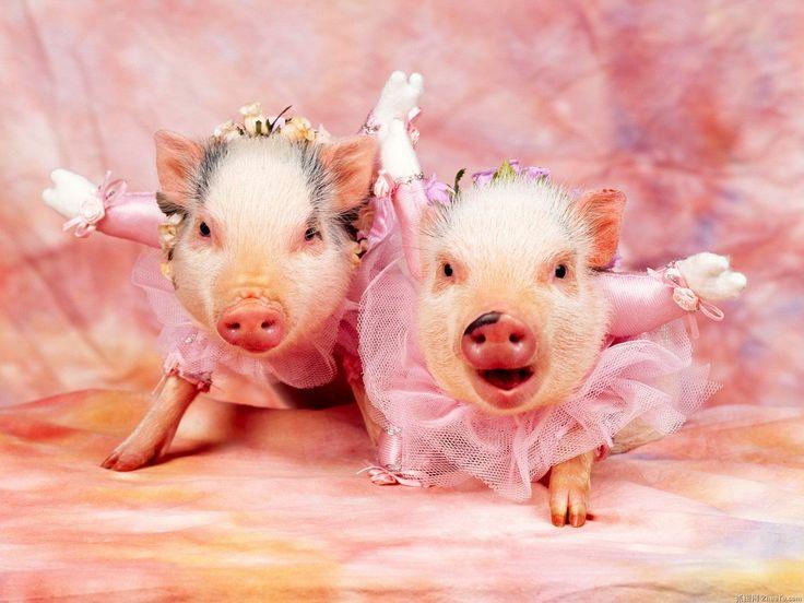 Pigs so lovely.