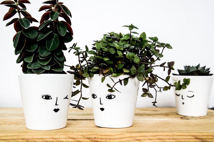Face plant pot set in 2020 face plant pot mini plant