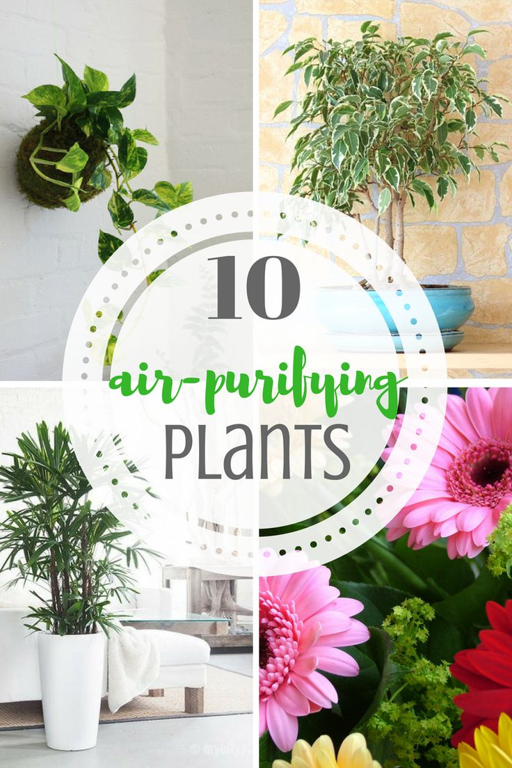 Plants, Air Purifying Plants, Houseplants, Easy to Grow Plants, Easy to Grow Houseplants, Simple Care House Plants, Gardening, Indoor Gardening, Growing Plants Indoors, -- with horrible furnace in rental, need these desperately!!