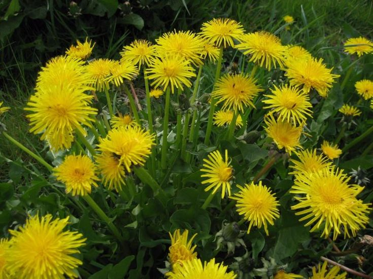 Günde 5 çiçek sapı tüketirseniz eğer... 7.resim