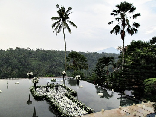 This sea of trees is an alternative scenery offered by Kupu-Kupu Barong. Photo courtesy of Kupu-Kupu Barong via The Jaka...