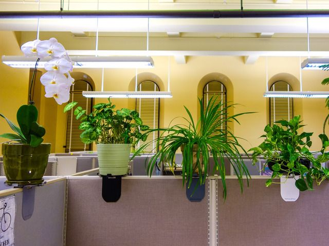 14 best pimp my cubicle images on pinterest the office offices and cubicle ideas - Cubicle planters ...