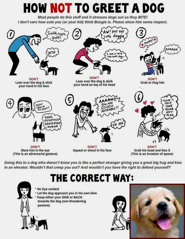 Ways To Potty Train A Dog And What Is The Best Way To Train Your