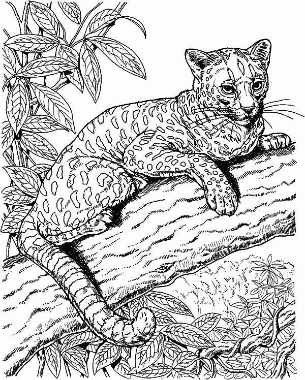 Animal Coloring Pages for Teenagers   Pirografi, Seni rupa, Seni   748x600