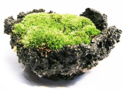 ミニ盆栽・苔盆栽「mossmin(モスミン)」苔の育て方・手入れ