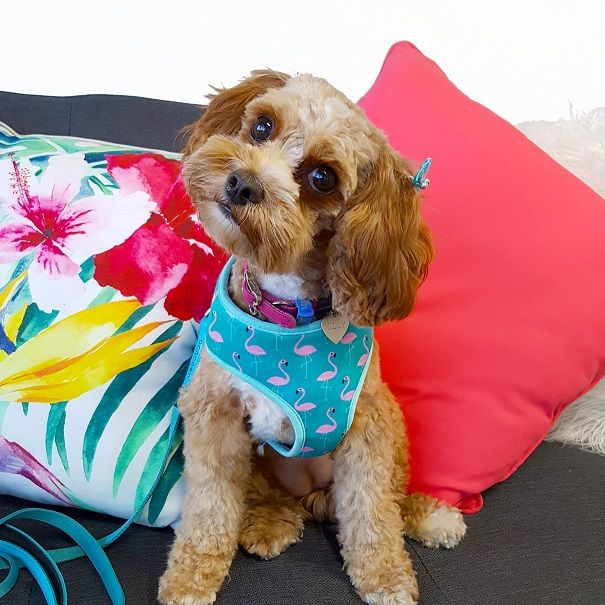 Dog Harness Safety
