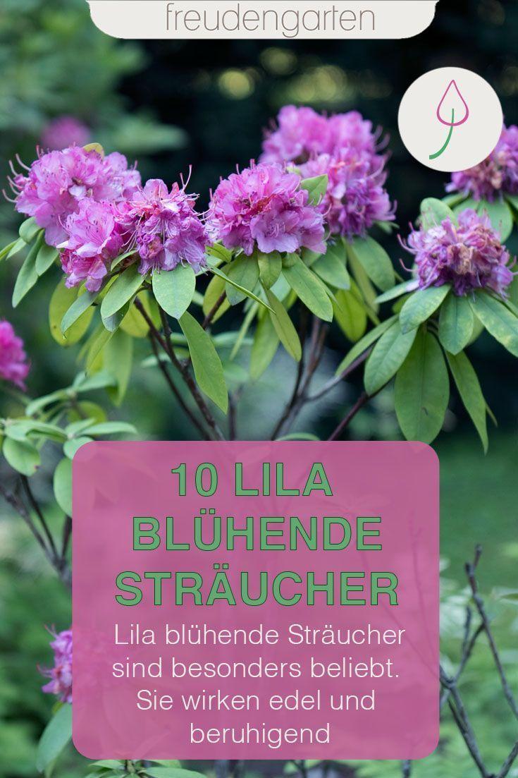 Die Schonsten Straucher Mit Lila Bluten Straucher Lila Bluten Bluhende Straucher