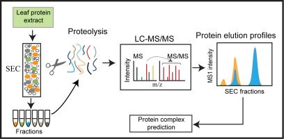 #JoP: Analysis of protein complexes in Arabidopsis leaves using size exclusion chromatography and label-free protein correlation profiling
