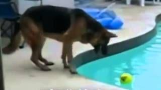 Mix De Videos De Risa De Animales Caidas Accidentes Fails Golpes Trompazos http://compartirvideos.es/mix-de-videos-de-risa-de-animales-caidas-accidentes-fails-golpes-trompazos-video_e2c4f66ef.html #compartirvideos.es #videosdivertidos
