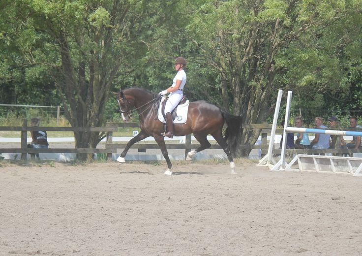 Der Strauss - MA1 - FredemarksgårdDer strauss er en letridelig vallak, med stor kapacitet og gangformåen. Han viser ligeledes stort talent i de samlende øvelser.  Der Strauss er ud af en stærk hoppestamme der bl.a har lavet GP hesten Lutz H samt talrige fløj føl ved diverse følskuer. #Stutteri #Heste #ridning