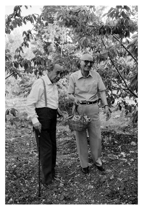 Leonardo Sciascia e Gesualdo Bufalino colgono l'uva sicula.