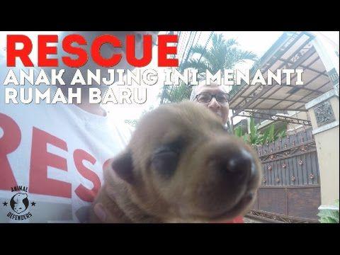 RESCUE: Proses Penyelamatan Anak Anak Anjing yang Terlantar