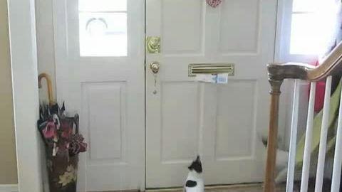 Pub-viyo-chien-chat-courrier