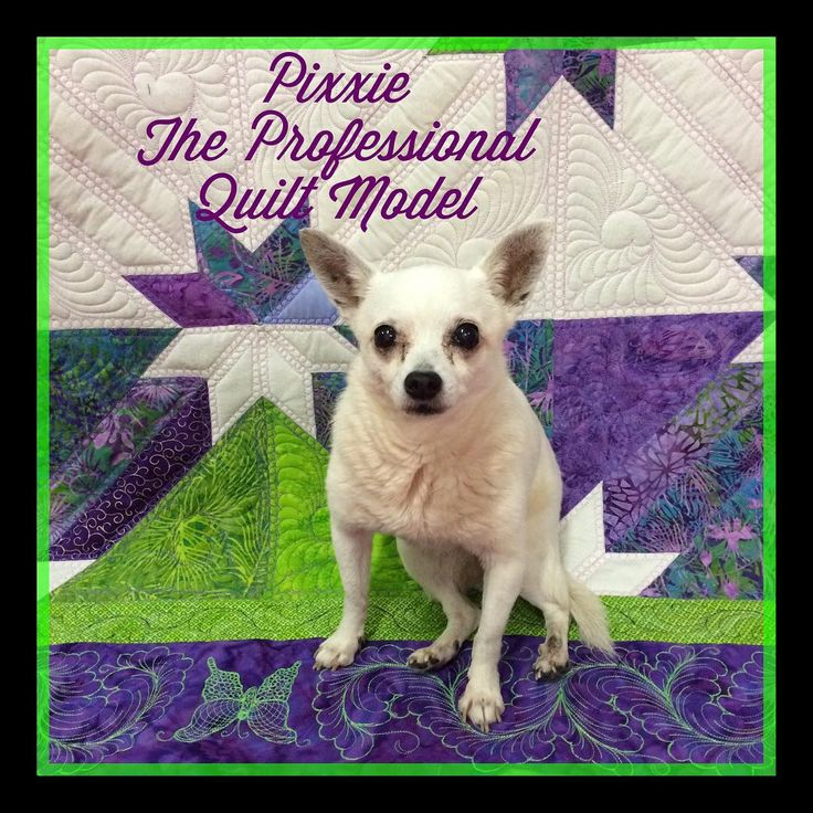 #iLoveMyDog she can sit on my quilt anytime!