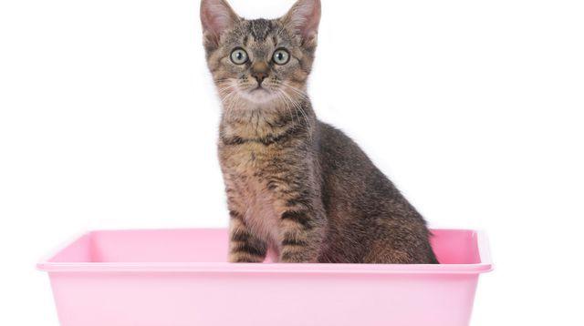 Comment enlever une odeur d'urine de chat ?