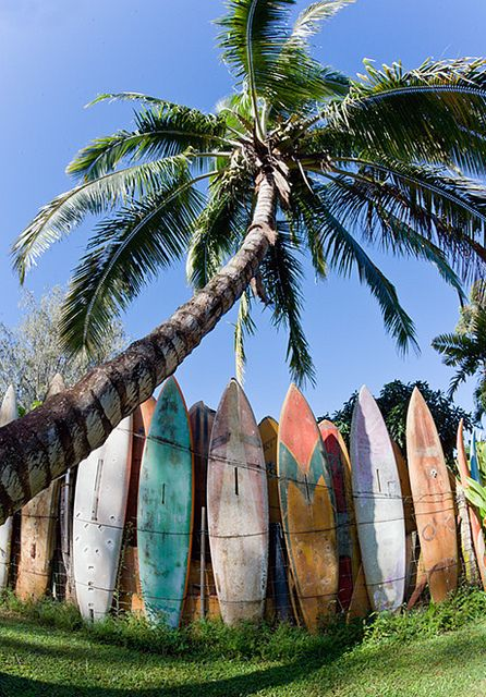 I'd have to try to surf at least once. I'd feel so out of place if I didn't! Plus why not take one more opportunity? It's not like I will be in Hawaii forever.