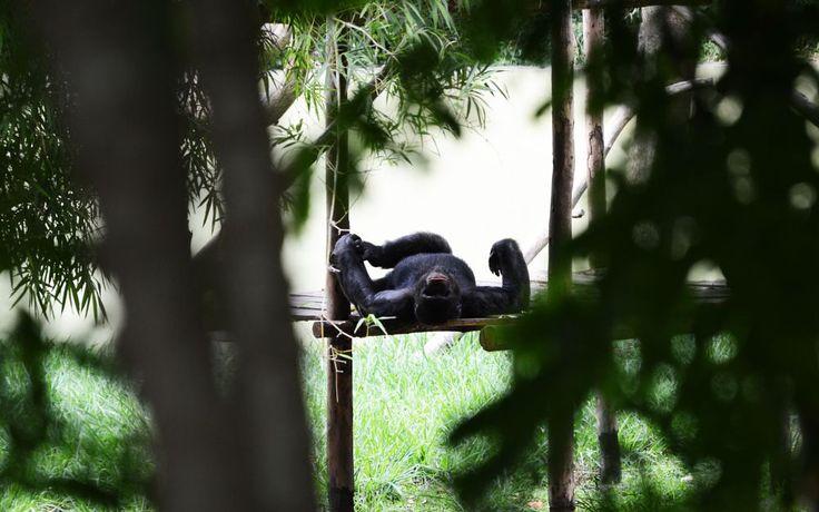 Apes by prabhuviswa