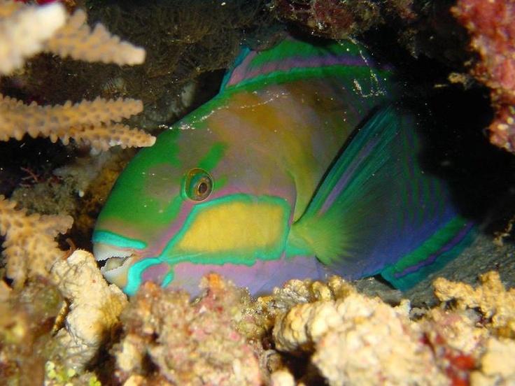 Exotic Fish.... Parrot fish