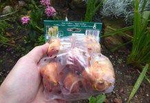 Fiche conseil : La plantation des bulbes de tulipes, étape cruciale