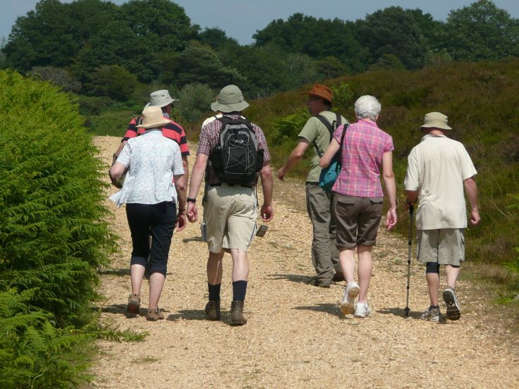 Festival Week will be celebrated outdoors with 'Walking Picnics' who offer the chance to explore the beautiful New Forest as part of a small group guided a local wildlife naturalist leader.  Licensed by the Forestry Commission and run by Nigel and Christine Owen, The Walking Picnics Festival event is a two-hour guided walk starting from Anderwood