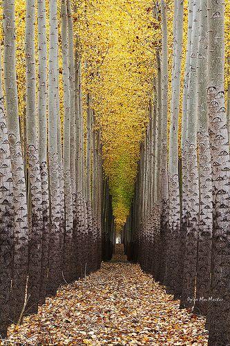 ✯ Walking Towards The Light....Tree Farm near Boardman, Oregon