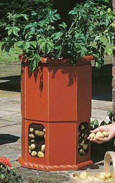 Viktorianisches Kartoffelfass Möchten Sie Kartoffeln in Ihrem Garten oder auf Ihrer Terrasse anbauen? Dann ist dieses Kartoffelfass die platzsparende Lösung. Das Kartoffelfass hat ein Fassungsvermögen von 80l Kompost und Sie können so bis zu 5 Kartoffelpflanz Mehr