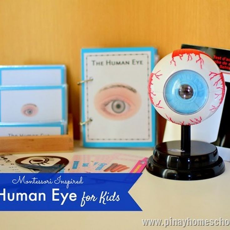 Learning the Parts of the Human Eye   The Pinay Homeschooler