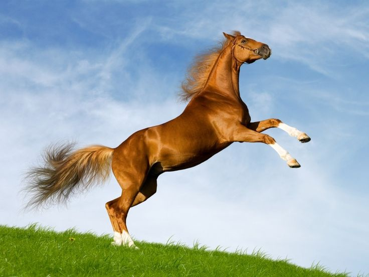 Horse: Beautiful Horses, Animals, Horse Pictures, Pet, Wallpapers, Beauty, Photo, Horse Wallpaper