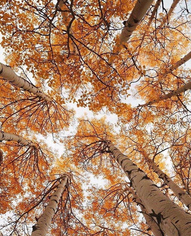 Autumng Asthetics: 76 Best Novel Aesthetics Images On Pinterest