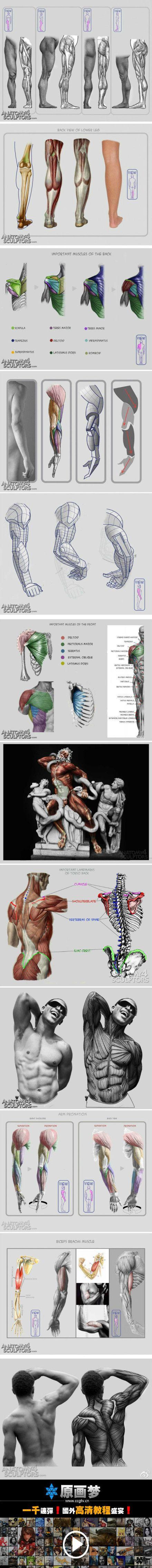1060 best anatomia images on Pinterest | Anatomy reference, Anatomy ...
