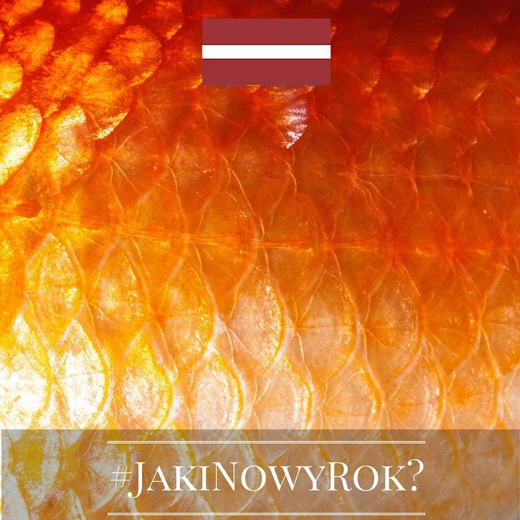 Jaki będzie Nowy Rok? Tego jeszcze nie wiemy, ale znamy ciekawe sylwestrowe i noworoczne zwyczaje europejczyków. Chcecie je poznać? Śledźcie naszą instakampanię każdego dnia, aż do 1 stycznia 2016 r. Wejdźmy w nowy, 2016 rok razem z nadzieją i uśmiechem!  Dzień 16 - Łotwa! Łotysze, by móc cieszyć się w nowym roku mnóstwem pieniędzy, wkładają swoim najbliższym rybią łuskę do portfela. Tradycja dość znajoma, prawda? :) #JakiNowyRok? #KE #UE #Zwyczaje #NowyRok #Sylwester #UE28 #UniaEuropejska…