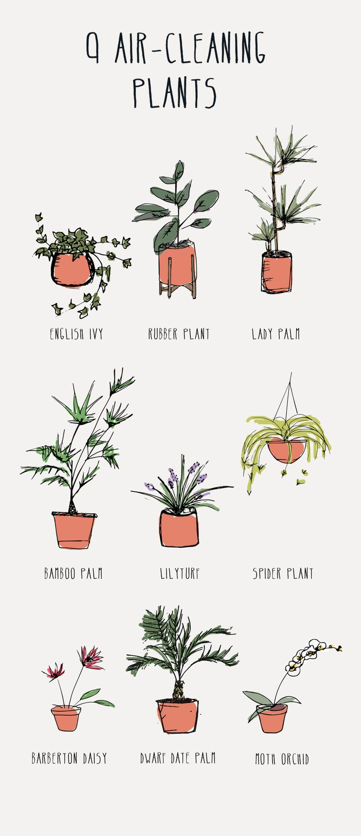 9 Best Air-Cleaning Plants