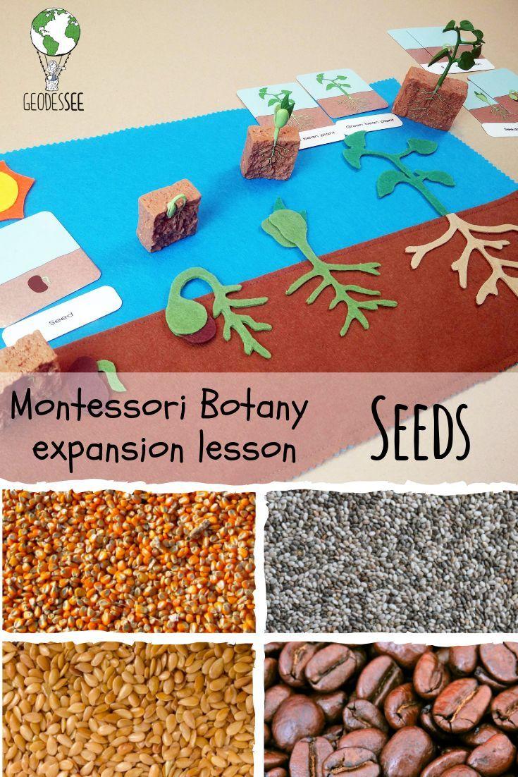Montessori Botany expansion lesson: Seeds – Geodessee.