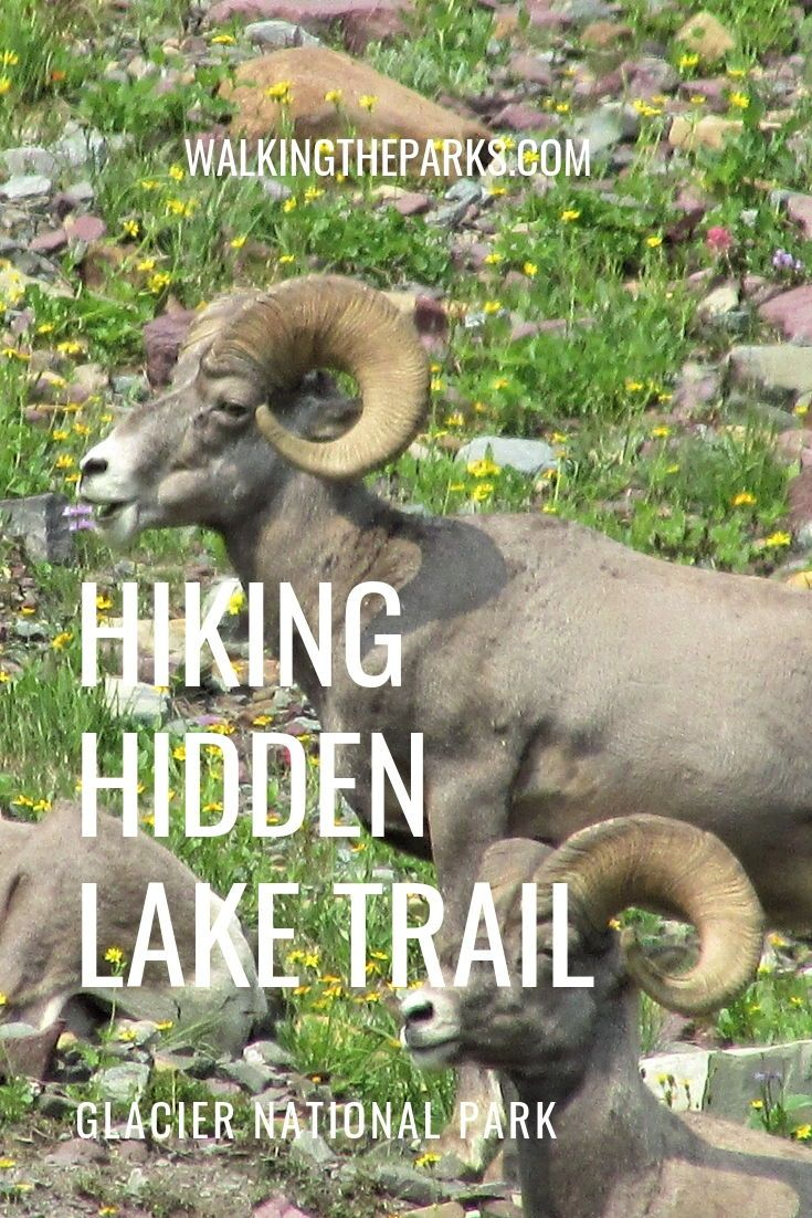 Hiking to Hidden Lake in Glacier National Park Uncovers Many Treasures