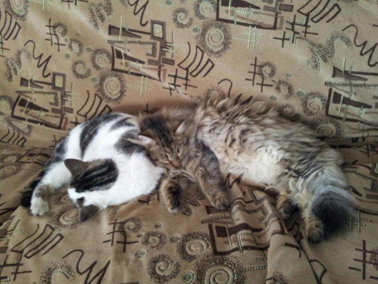 Albush & Mitzi